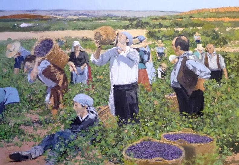 Elaboración del vino I. Cultivo de la uva, vendimia y aplastado