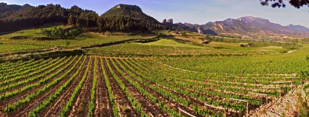 Las 5 mejores rutas de enoturismo en España
