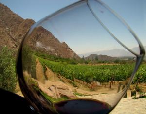 Productores de vino en Italia